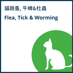 Cat Flea, Tick & Worming