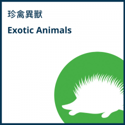 Exotic Animals
