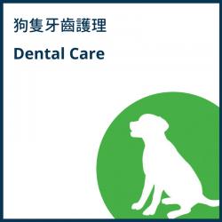 狗隻牙齒護理